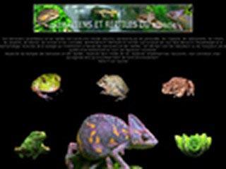 Batraciens et reptiles du monde