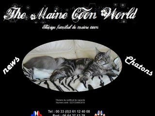 The maine coon world, chatterie familial