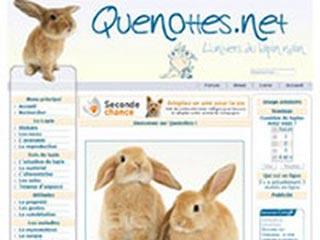 Quenottes.net : L'univers du lapin nain