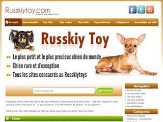 Russkiy toy, petit chien russe tres sympa et de peteit taille