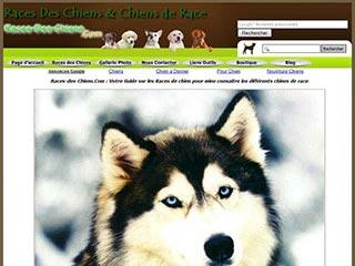 Races de chien, tout connaitre sur les différentes races